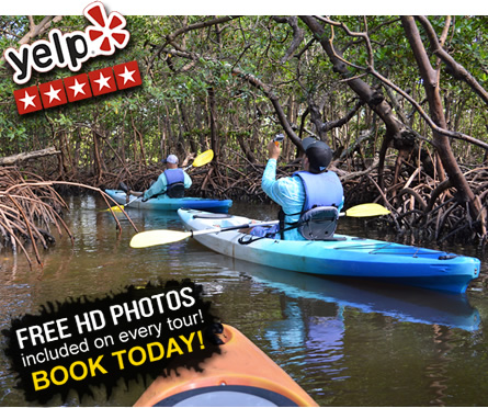 Mangrove Tunnels Kayak Tour in Naples